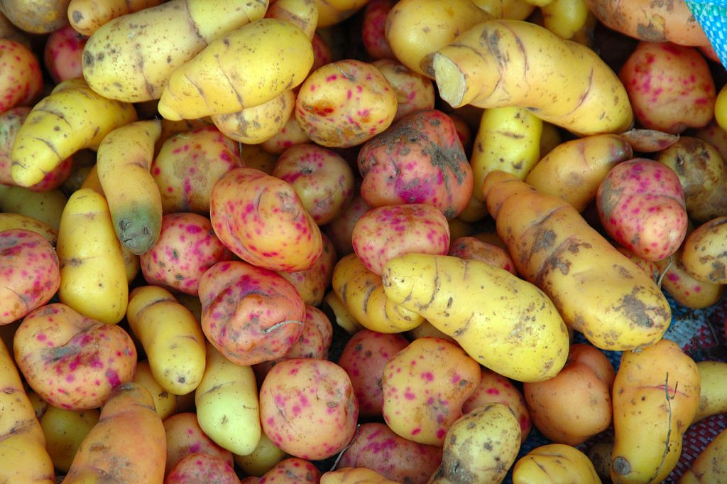 Healthy Legumes and Tubers | healze.com