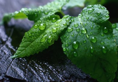Benefits of Peppermint for good health
